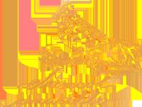 Chincol Amarillo